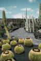 cactus du jardin de cactus a lanzarote